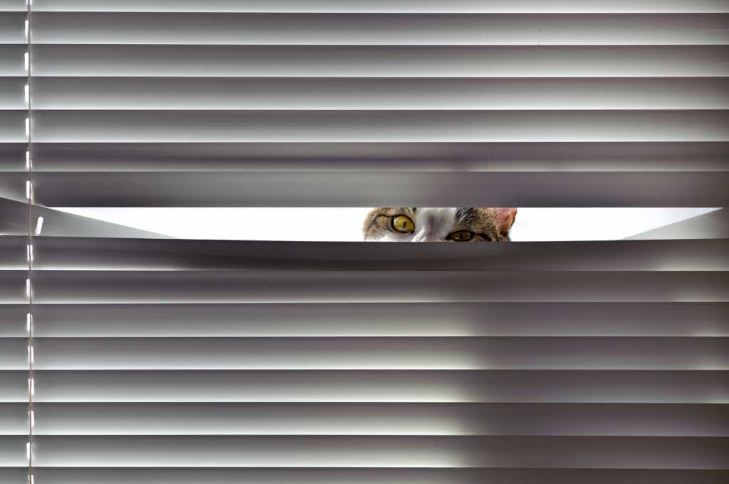 Curious cat looking through blinds