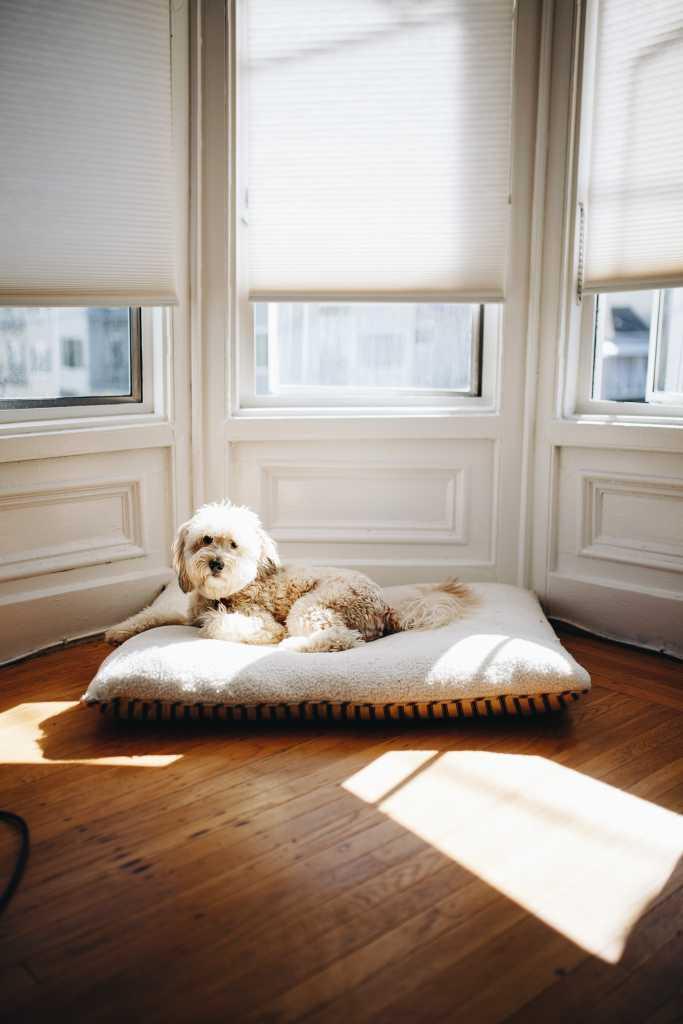 dog sat near window blinds