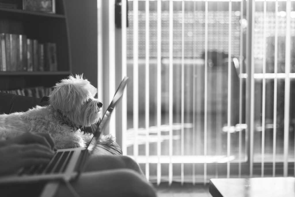 Dog near laptop and window blinds